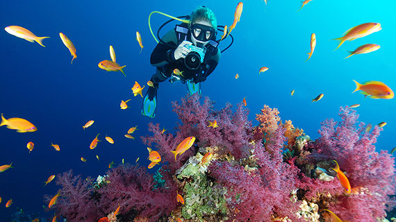 underwater digital diver photographer padi specialty diving sea el sharm sheikh dive course scuba camera exotic instructor egypt beginners courses